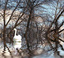 Winter Water by digitalmidge