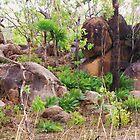Taken somewhere on the Stuart Hwy, NT.Australia by TracyD