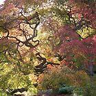 Tree  /  Holmdel Aboretum  by Rick  Todaro