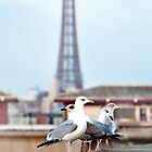 Gulls at Blackpool - Postcard by David Bradbury