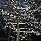Winter Branches by HELUA