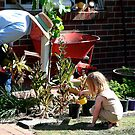 Gardening with Grandpa by Maggie Hegarty
