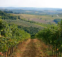 The Vineyards of Tuscany by patti4glory
