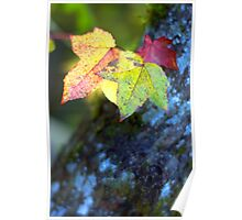 Leaves and Moss Poster