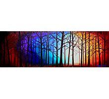 Tangled Trees Photographic Print