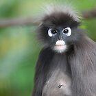 Dusky Leaf Monkey by Cathy Cormack