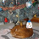 Frank Found The Best Spot For A Long Winters Nap... by Tracy Faught