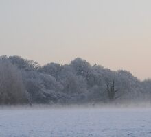 White Trees Of A White Field by cmh1