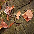 Autumn leaves by texianlive
