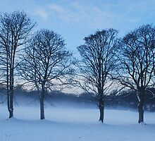 winter trees in snowscape by choppers