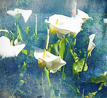 Calla Lily Blues by Cathy  Walker