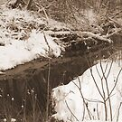 Snowy Stream by BarbL