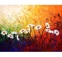 The Daisy Dance Photographic Print