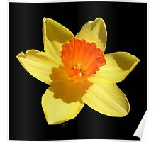 Negative Space Narcissi Poster
