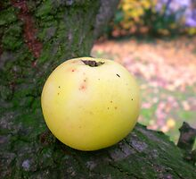 An apple a day... by Catherine Brookes