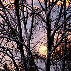December sunset by Bluesrose
