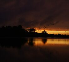 Sunset..Woodland Waters...Lincolnshire by scribblerjo