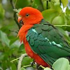 Fluffy King Parrot by Margaret Stockdale
