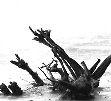 trunk by Heike Nagel