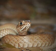 Eastern Coachwhip Snake    by Michael L Dye