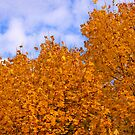 Just a Fall Day by JulieDanielle