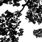 Silhouette of Tree Canopy by Enchanted Studios