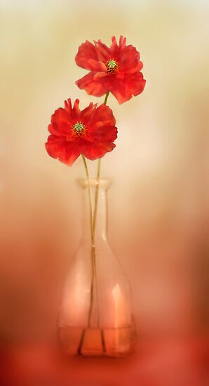 Poppy pleasure by Mandy Disher