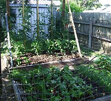 My Vegetable garden by SDJ1