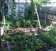 My Vegetable garden by SDJ1