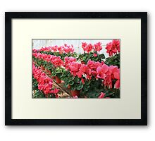 Rows and Rows of Flowers Framed Print