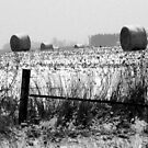 Winter Bales of Hay by Brian Gaynor