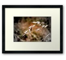 Base Elements : Grass Seed Pods Framed Print