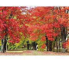 Beautiful Trees Photographic Print