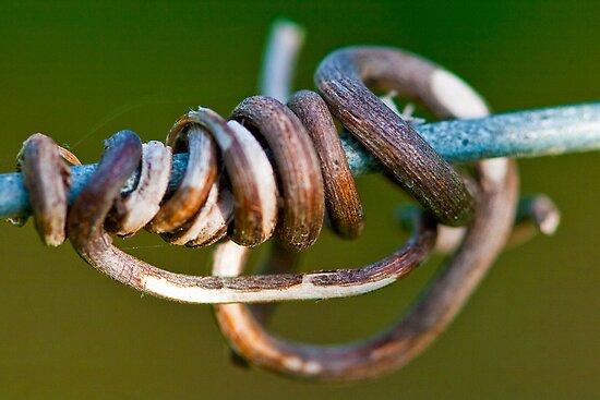Vines in the wire by John Finkelde