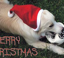 Merry Christmas : from the dog by michelle roseman