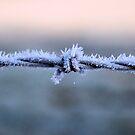Sharp Frost by JEZ22