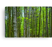 Tree trunks Canvas Print
