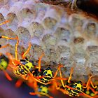 Saturated  Bees and nest by Barbara Anderson