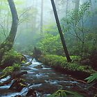 MISTY STREAM by Chuck Wickham