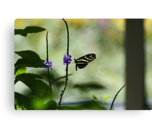 Butterfly in The Pavilion Canvas Print