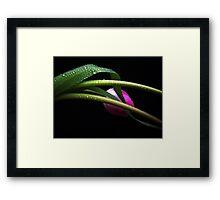 Gentle Tulip. Framed Print