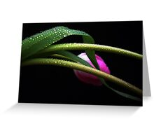 Gentle Tulip. Greeting Card