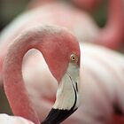 Flock by Kristin Nichole Hamm