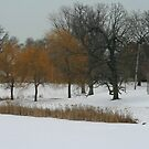 Winter In The Park by kkphoto1