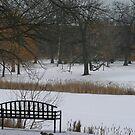 Park Bench In Winter by kkphoto1
