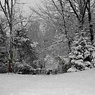 Snow storm of December 2009 by Linda Costello Hinchey