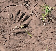 Wherever you go .... Leave a good impression ~ Raccoon handprint by Jan  Tribe