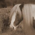 Horse with no name by FelicityB