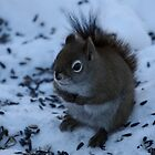 Shivering Red Squirrel by cjbenck
