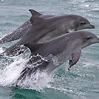 Flying Dolphins by saltwatershots